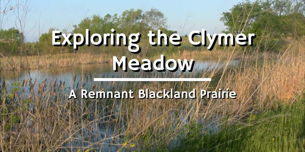 clymer meadow spring
