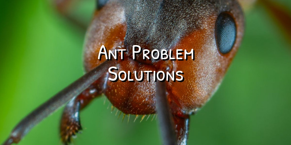 ant feature