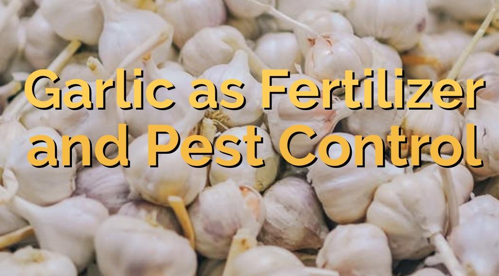 garlic as fertilizer