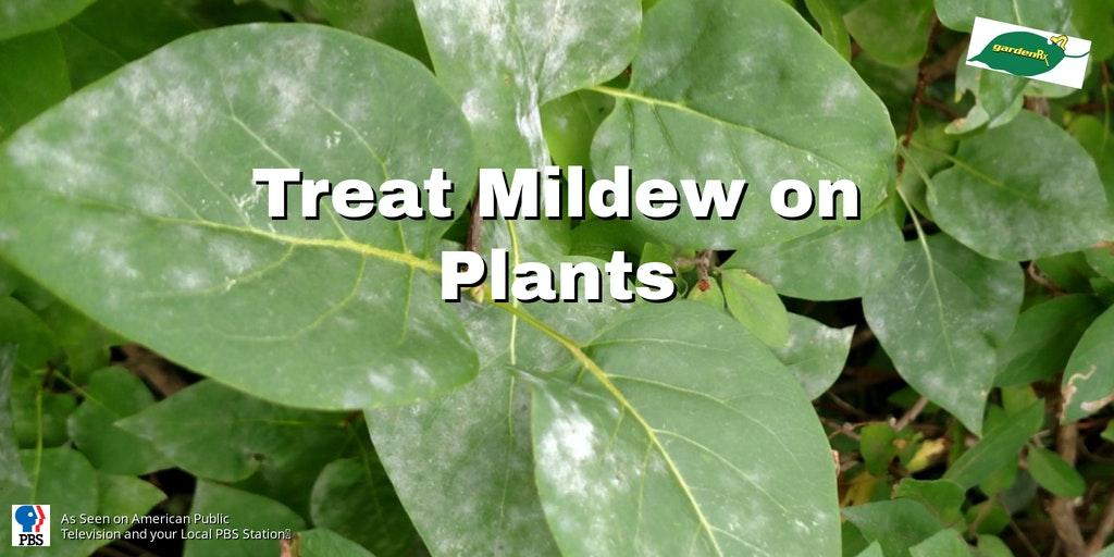 white powdery mildew on green leaves
