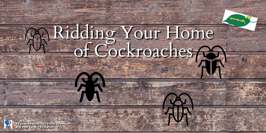 roaches banner