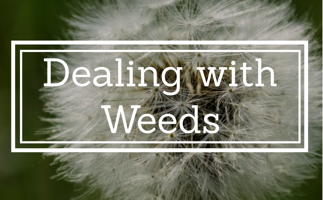 Dealing with Weeds 1