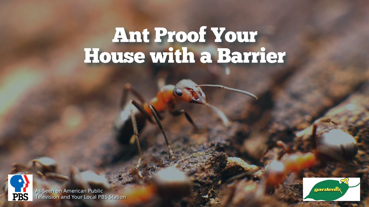 Ant Proof Your House